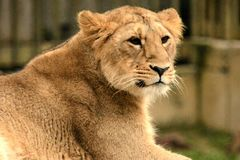 Predator. Animal animals wildlife Stock Image