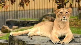 Predator. Animal animals wildlife Royalty Free Stock Photography
