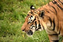 Predator. Animal animals wildlife Royalty Free Stock Images
