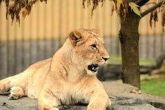 Predator. Animal animals wildlife Royalty Free Stock Image