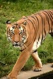Predator. Animal animals wildlife Royalty Free Stock Photos
