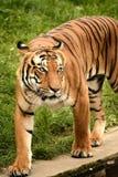 Predator. Animal animals wildlife Stock Photo