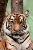 Predator. Animals natural wildlife Stock Photos