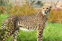 Predator. Animals natural wildlife Stock Image