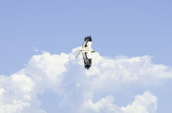 Predator flying. Eagle flying in the sky Royalty Free Stock Photos