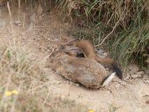 Predator and prey Royalty Free Stock Photo