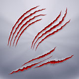Predator Scratches. Realistic Predators Wound, Scar, Mark Effects. Scratch Claw Animal and Illustration Shred From Claw Royalty Free Stock Images