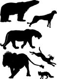 Predator silhouettes. Illustration with predator silhouettes collection isolated on white background Royalty Free Stock Photography