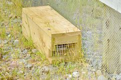 Predator trap at the Bois Gentil Kiwi Crèche, New Zeland. Greymouth, South Island, New Zealand, November 22, 2016: Predator trap at the Bois Gentil Kiwi Cr royalty free stock photo