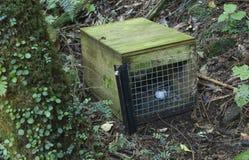 Predator trap Royalty Free Stock Photo