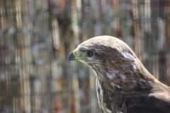 Predator with wings Royalty Free Stock Photos
