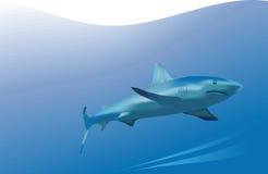 Predatore marino Fotografia Stock
