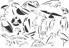 Predatori degli uccelli Fotografia Stock