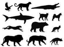 Predators. Vector illustration of various predator animal silhouettes Royalty Free Stock Images