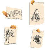 Predators. A series of bloodthirsty predators and their skulls Royalty Free Stock Images