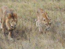 Predators Stock Photography