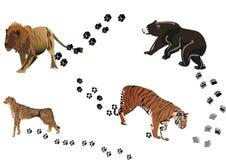 Predators and its tracks Royalty Free Stock Photography