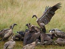 Predatory birds eat the prey in the savannah. Kenya. Tanzania. Stock Photo