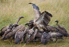 Predatory birds eat the prey in the savannah. Kenya. Tanzania. Royalty Free Stock Photography