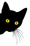 Predatory black cat. Predatory glance home a black cat Royalty Free Stock Photography