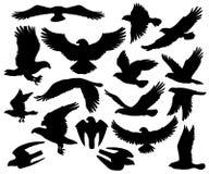 Free Predatory Eagle Or Falcon Hawk Birds Silhouettes Stock Photo - 148105230