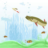 Predatory fish Royalty Free Stock Photography