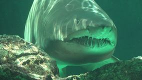 Predatory Fish And Sea Creatures stock video footage