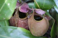 Predatory flowers. stock images