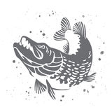 Predatory pike. The stylized image of fish. Vector