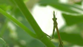 Predicador verde de rogaci?n almacen de metraje de vídeo