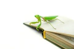 Predicador verde en un libro viejo, cierre para arriba, foco selectivo Mantodea Fotografía de archivo libre de regalías