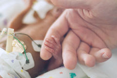 Preemie holding dads finger. Premature son holding father's finger Royalty Free Stock Photo