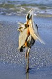 Preening at the Sea Royalty Free Stock Photos