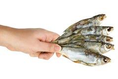 A preensão da mão poucos salgou peixes secados Fotos de Stock