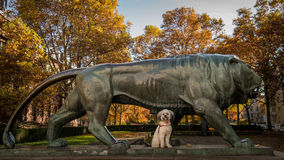 Preety and the beast. Small Shih Tzu and big sculpture o lion Stock Photo