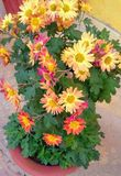 Preety flower pot stock images
