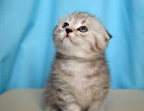 Preety kitty. Photo of the preety kitty Stock Photo