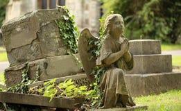 Pregare angelo con l'edera di strisciamento Immagine Stock