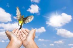 Pregare della donna ed uccello libero che godono della natura su cielo blu e su cloudsbackground bianco fotografie stock libere da diritti
