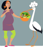 Pregnancy Diet. Stork in a chef's hat bringing a basket of vegetables to a young pregnant woman?  cartoon Stock Photography