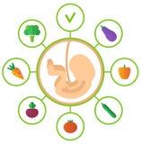 Pregnancy embryo healthy food Stock Photo