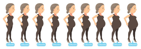 Pregnancy Stages. Stages of changes in a woman's body in pregnancy. Vector illustration Royalty Free Stock Photo