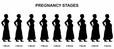 Pregnancy stages of a muslim woman silhouettes. All the objects and body stages are in different layers and the text types do not need any font Royalty Free Stock Image