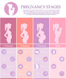 Pregnancy stages, trimesters and birth. Vector illustration of pregnant female silhouettes. Changes in a woman's body in pregnancy. Pregnancy stages, trimesters Stock Images