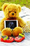 Pregnancy. Waiting for the child.Teddy bear with the ultrasound Royalty Free Stock Photos
