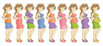 Pregnancy4. Pregnant woman in different clothes. Nine month set. Isolated vector illustration Stock Photos