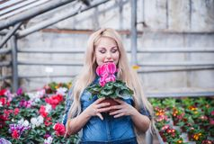 Pregnant woman working with flowers at greenhouse. stock image