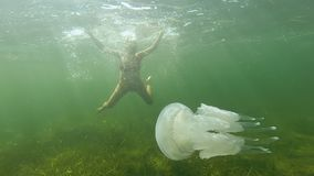 A pregnant cheerful young woman swims and dives under the water with a white jellyfish in the open sea. A pregnant cheerful young woman swims and dives under stock video