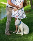 Pregnant couple and dog. Pregnant girl and man in summer park with dog white bullterrier royalty free stock images