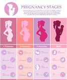 Pregnant female silhouettes. Vector illustration of pregnant female silhouettes. Changes in a woman's body in pregnancy. Pregnancy stages, trimesters and birth Stock Images